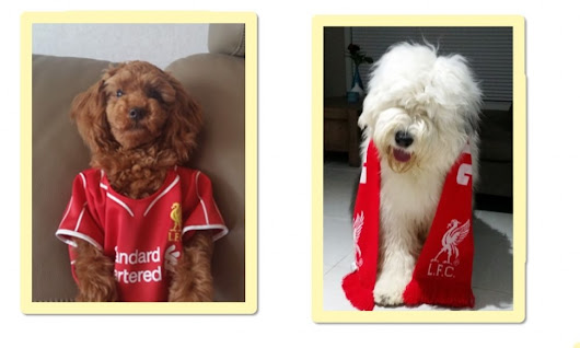 Doggystyle! 66 photos that prove that Liverpool FC are the most supported club in the dog world - Liverpool FC