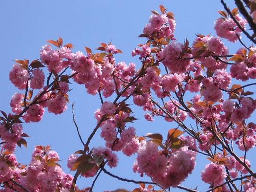 013 pink in blue sky