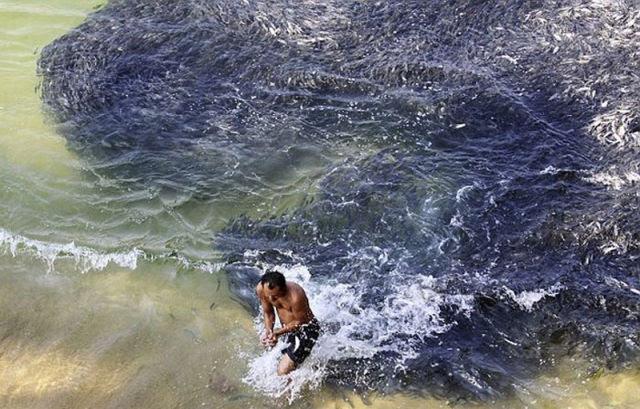 Incríveis cardumes de peixes na costa de Acapulco 04