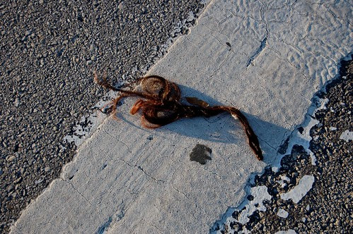 Road kill hair extension