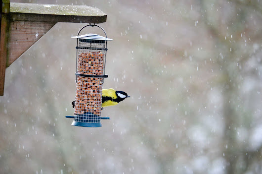 Help Birds Make It Through the Coldest Month – Colony Limo Blog