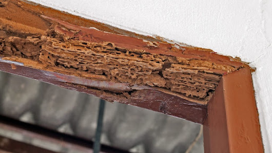 Does Homeowners Insurance Cover Termite Damage? The Answer Might Bug You