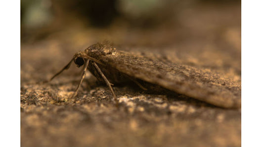 Number of winter moths damaging trees declines - WTNH