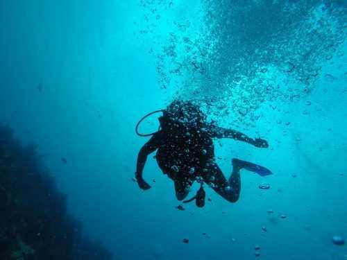 Beat the summer heat with Scuba Diving at the upcoming Underwater Festival in Mumbai this weekend