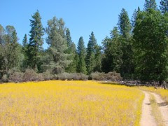 the yellowfields of sat loop