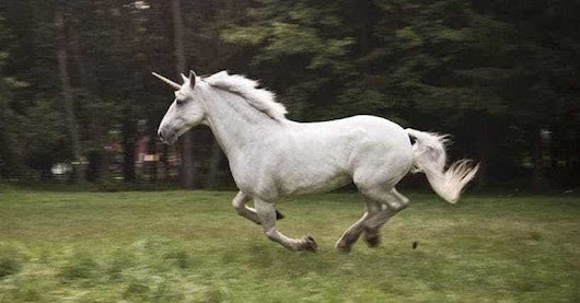 All The Evidence That Unicorns Were Actually Real