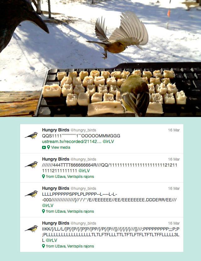 Birds on Twitter twitter computers birds animals