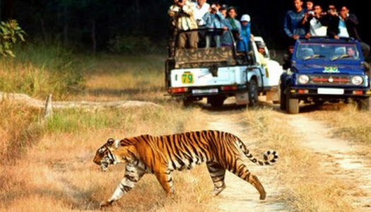 Corbett tour packages, Corbett weekend tour, north india wildlife tour package, tiger tour