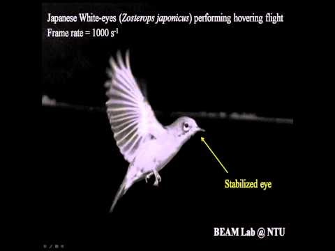 How some birds keep their eyes on the prize