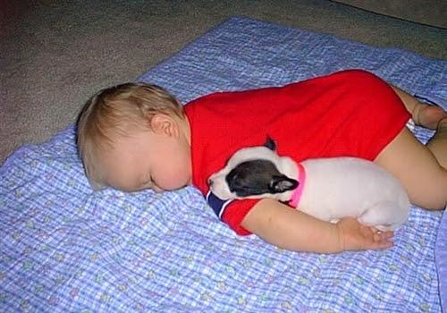 Part sleeping baby, part sleeping dog, all cute