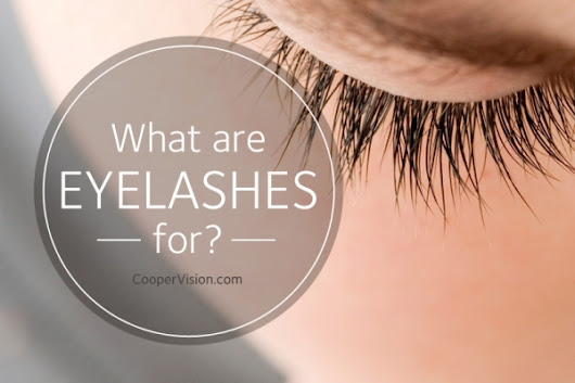 What are eyelashes for? | CooperVision