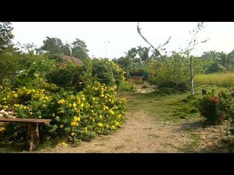 Akhir Pekan Seru di Taman Bunga Pulau Palas, Tembilahan