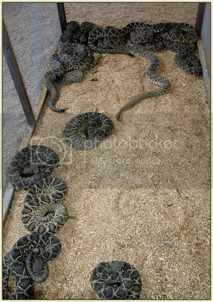 ...and Yet More Snakes...
