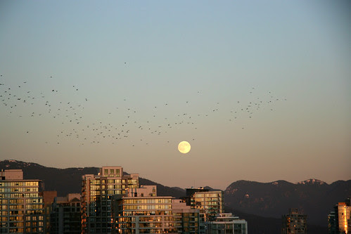 Crows at moonrise