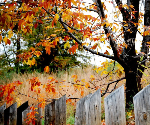 Clad in autumn hues