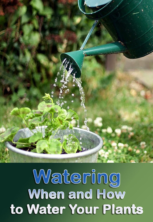 Watering – When and How to Water Your Plants - Quiet Corner