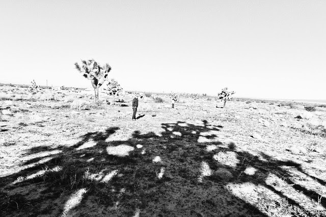 Desert Grain