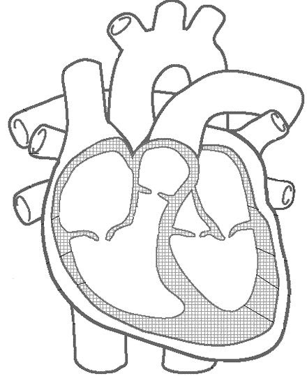 Blank Heart Diagram Blood Flow | About America Network Solution ...