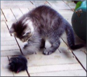 Umuligt med ikke-rystede billeder, når pelsmusen er med ;o)