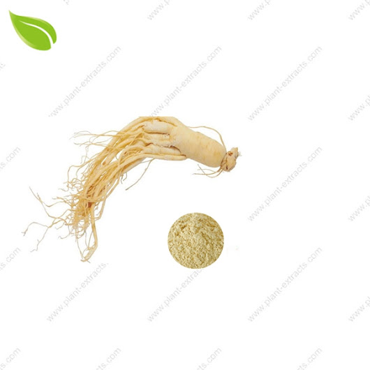 Ginseng Extract CAS NO. 90045-38-8 | Ginseng Extract Manufacturer | Ginseng Extract Supplier
