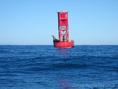 Sea Lion on the Noyo Bell Buoy