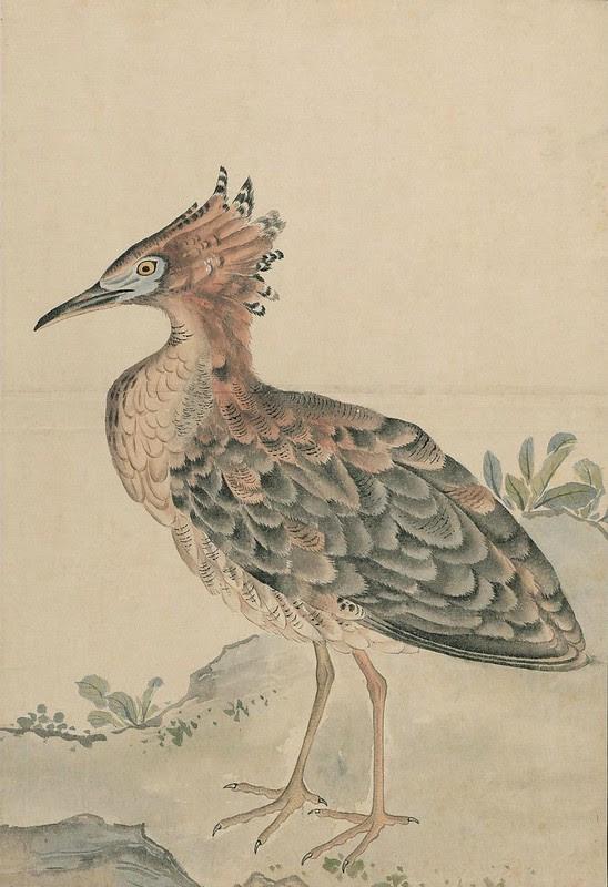 Ink + Watercolour  Bird sketch u