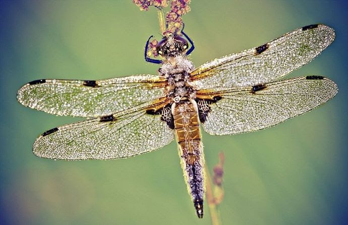SOS από επιστήμονες: Εξαφανίζονται τα έντομα, απειλούνται τα οικοσυστήματα