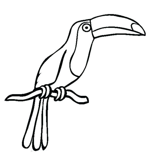 Easy Toucan Drawing Step By Step