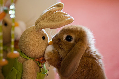 Rabbit-and-bunny-teddy-bear_large