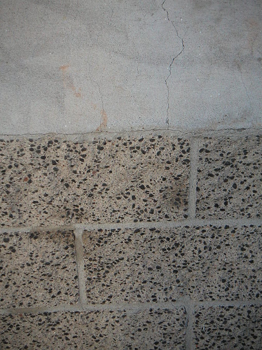 Fungi for self-healing concrete