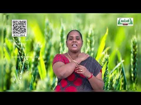 5th Science தாவரங்கள் Plants பருவம் 2 அலகு 3 பகுதி 2 Kalvi TV