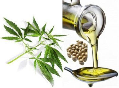 Why Hemp Skin Care is Benificial for your Daily Regime