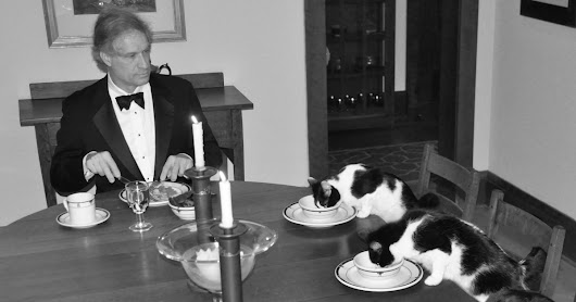 When His Wife Goes On Vacation, This Man Has Secret Fancy Dinners With His Cats