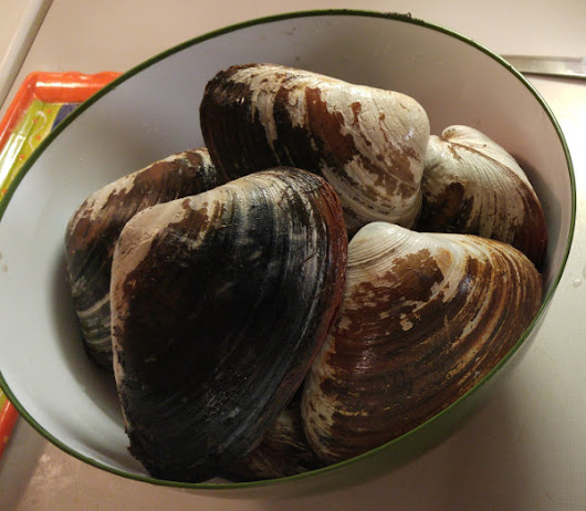 How to Dig, Prepare, and Cook Clams