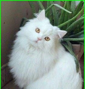 Kucing Lucu Kucing Lucu