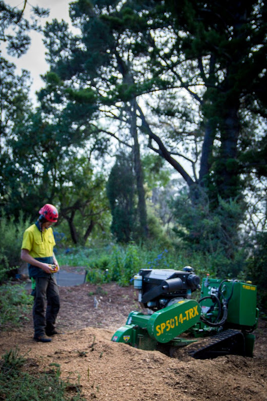 Tree Stump Removal Melbourne - Arborcraft Tree Services
