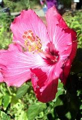 Flower_91110c