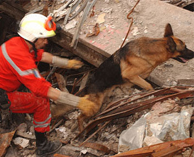 search and rescue dog on 9/11