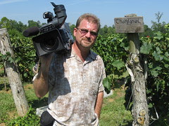 No shade in a vineyard