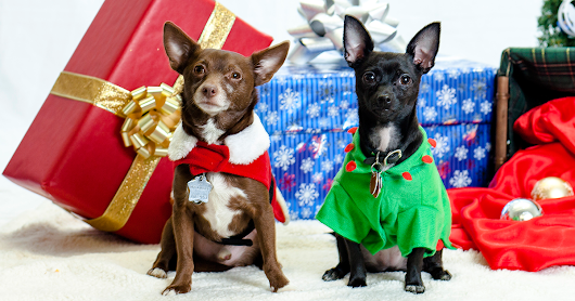 Top Ten Holiday Dangers for Pets: What You Should Know