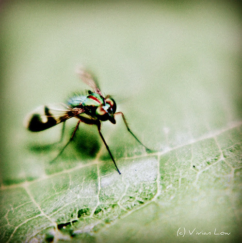Little bug by cottonbud_design