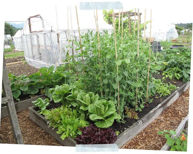 Garden During 3