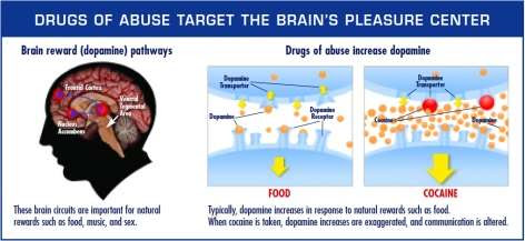 Displays how drugs of abuse target the brain's reward system by flooding the circuit with dopamine.