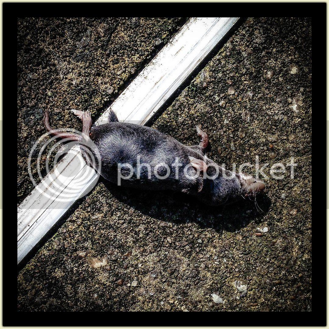 Drowned Mole