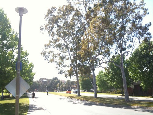 On the UCSD campus