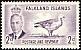 Upland Goose Chloephaga picta