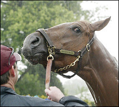 SPORT HORSE RACING