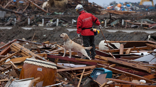 From Fire Hydrants To Rescue Work, Dogs Perceive The World Through Smell