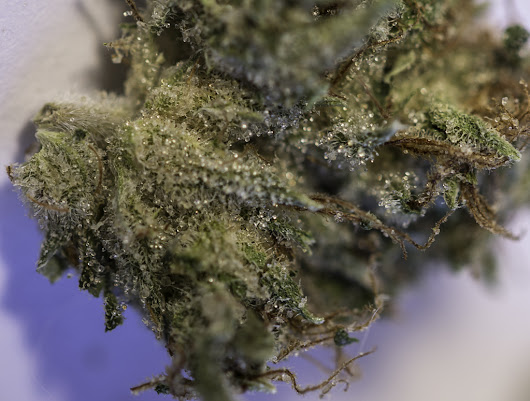 Trichomes - Nature's Way Medicine