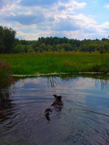 afternoon dip